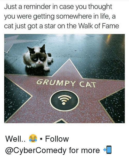 Memes, Grumpy Cat, and 🤖: Just a reminder in case you thought  you were getting somewhere in life, a  cat just got a star on the Walk of Fame  GRUMPY CAT Well.. 😂 • Follow @CyberComedy for more 📲