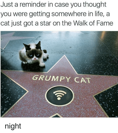 Grumpy Cat, Black Twitter, and Case: Just a reminder in case you thought  you were getting somewhere in life, a  cat just got a star on the Walk of Fame  GRUMPY CAT night