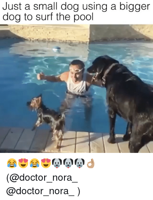 Doctor, Memes, and Pool: Just a small dog using a bigger  dog to surf the pool 😂😍😂😍🐶🐶🐶👌🏽 (@doctor_nora_ @doctor_nora_ )