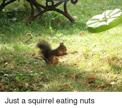 French Bank S Clients Go Nuts Over Squirrel Image The Local