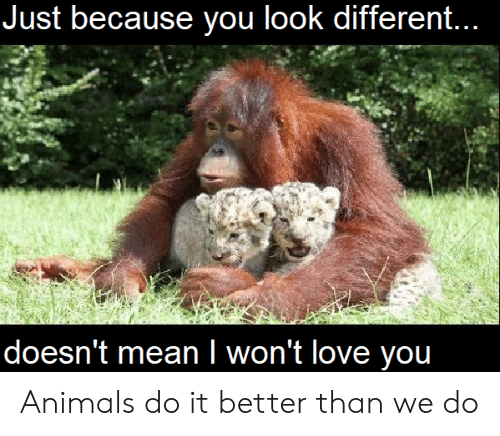 Animals, Love, and You: Just because you look different...  doesn't meanI won't love you Animals do it better than we do