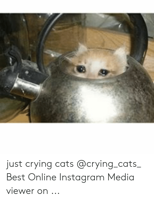 Just Crying Cats Best Online Instagram Media Viewer on ...