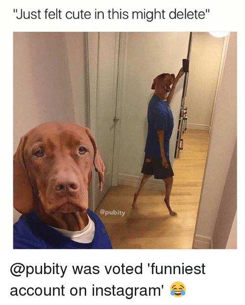 """Cute, Instagram, and Memes: """"Just felt cute in this might delete""""  @pubity @pubity was voted 'funniest account on instagram' 😂"""
