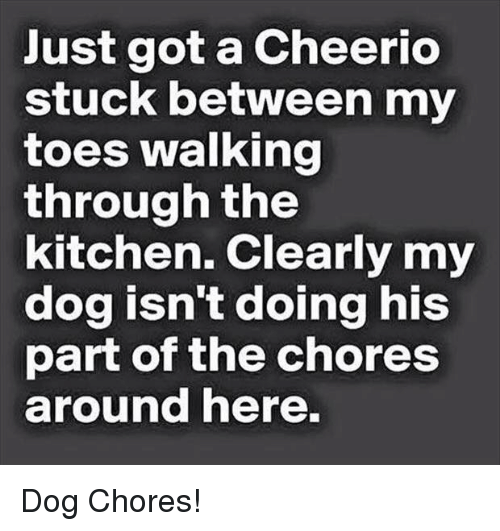 Funny, Got, and Dog: Just got a Cheerio  stuck between my  toes walking  through the  kitchen. Clearly my  dog isn't doing his  part of the chores  around here.