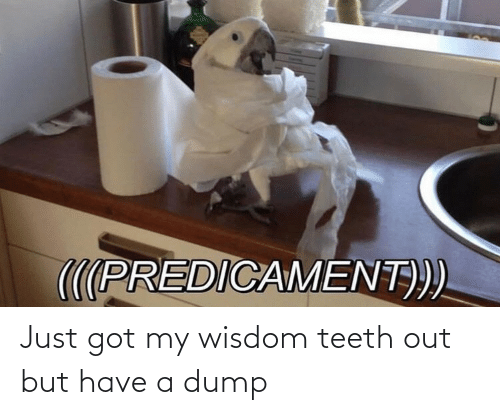 Wisdom, Got, and Teeth: Just got my wisdom teeth out but have a dump