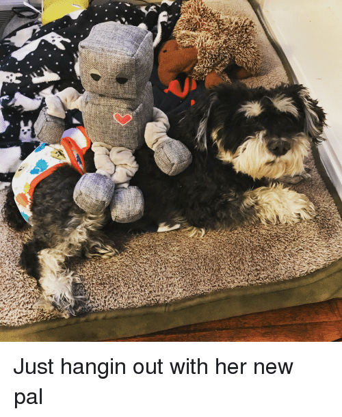 Her, New, and Pal