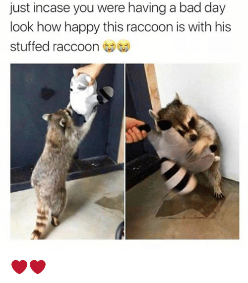 Bad, Bad Day, and Dank: just incase you were having a bad day  look how happy this raccoon is with his  stuffed raccoon ︶ ❤️❤️