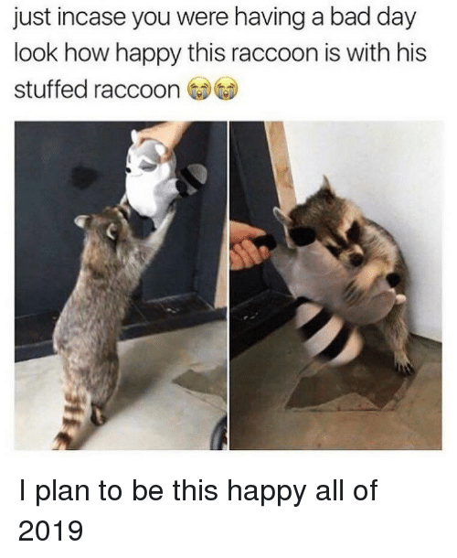 Bad, Bad Day, and Funny: just incase you were having a bad day  look how happy this raccoon is with his  stuffed raccoon I plan to be this happy all of 2019
