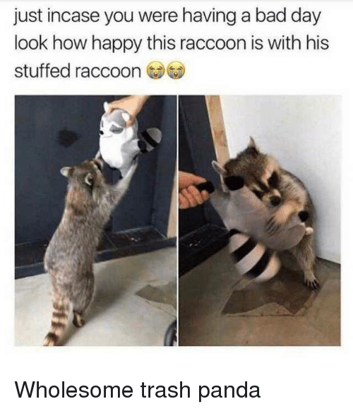 Bad, Bad Day, and Trash: just incase you were having a bad day  look how happy this raccoon is with his  stuffed raccoo Wholesome trash panda
