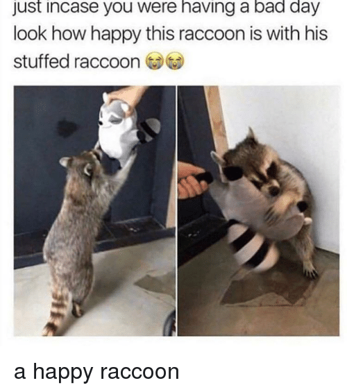 Bad, Bad Day, and Happy: just incase you were having a bad day  look how happy this raccoon is with his  stuffed raccoon