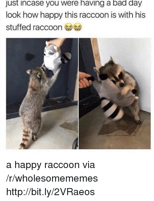 Bad, Bad Day, and Happy: just incase you were having a bad day  look how happy this raccoon is with his  stuffed raccoon a happy raccoon via /r/wholesomememes http://bit.ly/2VRaeos