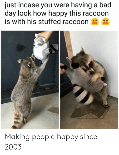 Bad, Bad Day, and Happy: just incase you were having a bad  day look how happy this raccoon  is with his stuffed raccoon Making people happy since 2003