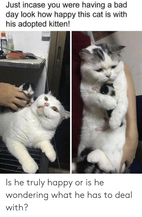 Bad, Bad Day, and Happy: Just incase you were having a bad  day look how happy this cat is with  his adopted kitten! Is he truly happy or is he wondering what he has to deal with?