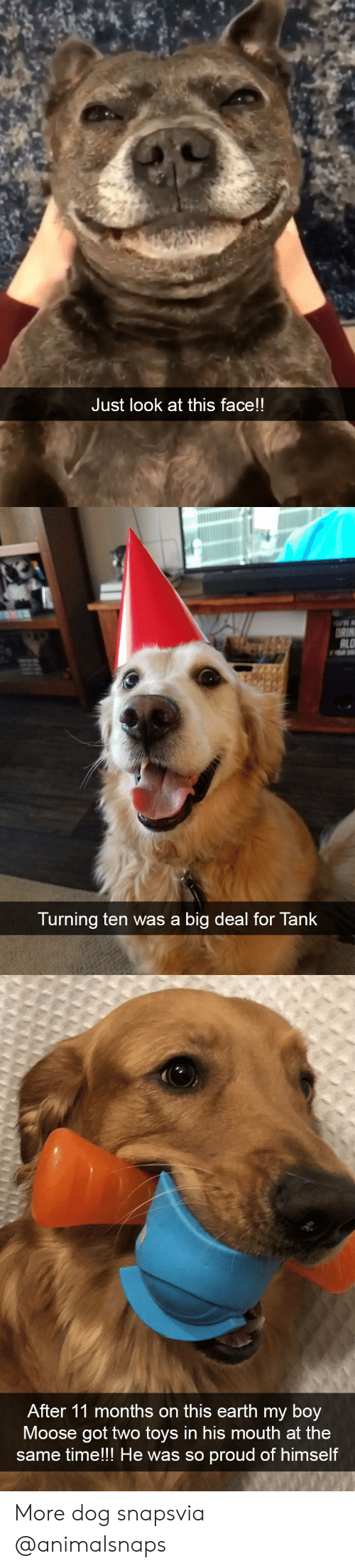 Target, Tumblr, and Earth: Just look at this face!!   ALO  Turning ten was a big deal for Tank   After 11 months on this earth my boy  9  Moose got two toys in his mouth at the  mell the was so proud of himse  same time!!! He was so proud of himself More dog snapsvia @animalsnaps