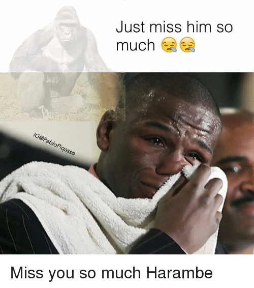 Just Miss Him So Much Miss You So Much Harambe Meme On Meme