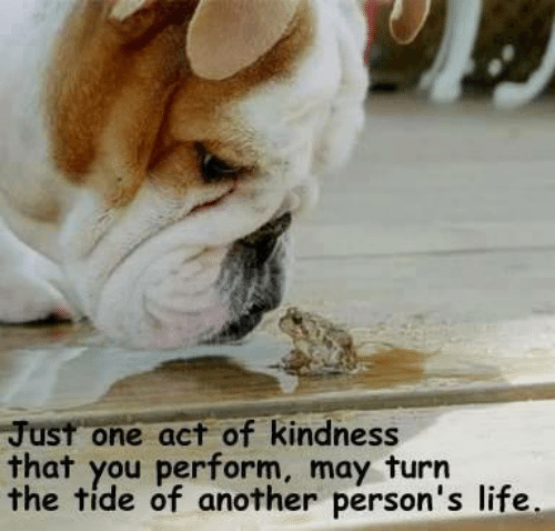 Life, Memes, and Kindness: Just one act of kindness  that you perform, may turn  the tide of another person's life