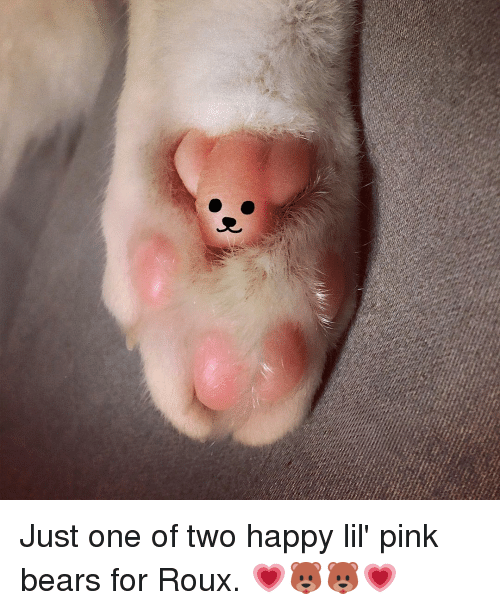 Memes, Bear, and Bears: Just one of two happy lil' pink bears for Roux. 💗🐻🐻💗