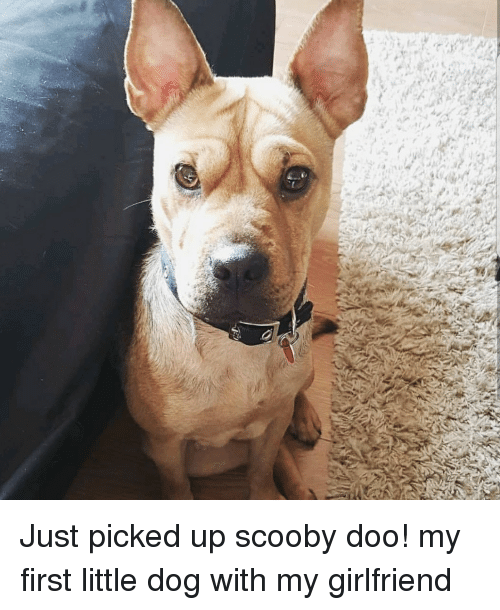 scooby doo little dog
