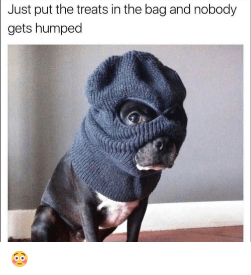 Funny, Just, and Nobody: Just put the treats in the bag and nobody  gets humped 😳