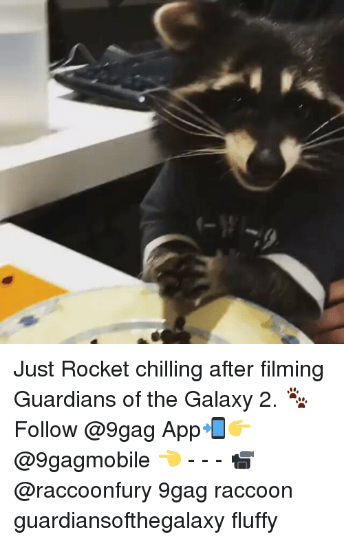 Memes, Guardians of the Galaxy, and Raccoon: Just Rocket chilling after filming Guardians of the Galaxy 2. 🐾 Follow @9gag App📲👉@9gagmobile 👈 - - - 📹@raccoonfury 9gag raccoon guardiansofthegalaxy fluffy