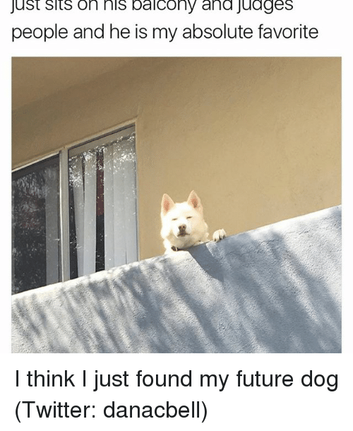 Funny, Meme, and I Just: just sits on his balcony and Judges  people and he is my absolute favorite I think I just found my future dog (Twitter: danacbell)