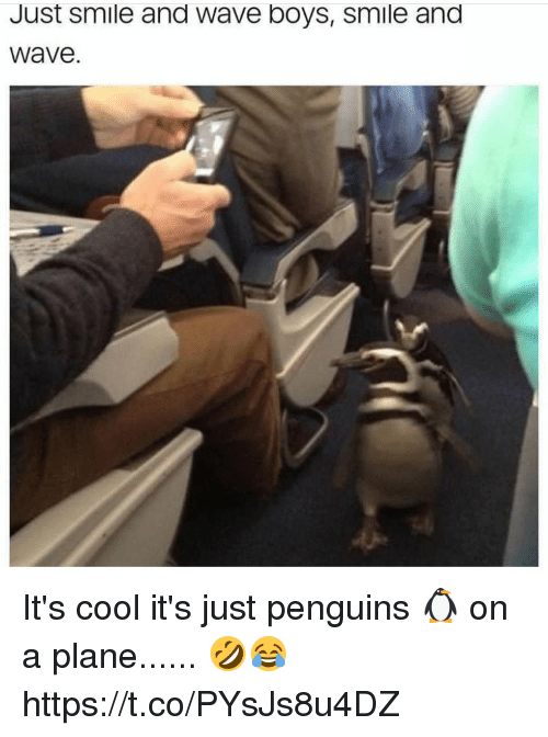 Cool, Penguins, and Smile: Just smile and Wave boys, smile and  Wave It's cool it's just penguins 🐧 on a plane...... 🤣😂 https://t.co/PYsJs8u4DZ