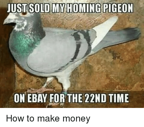 JUST SOLD MY HOMING PIGEON ON EBAY FOR THE 22ND TIME How to