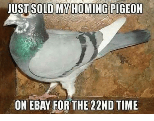 image: just-sold-my-homing-pigeon-on-ebay-for-the-22nd-17969204