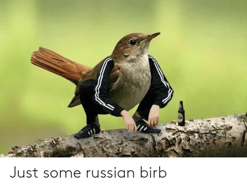 Russian, Just, and  Birb: Just some russian birb