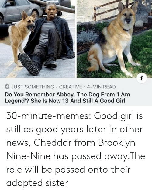 Memes, News, and Tumblr: JUST SOMETHING CREATIVE 4-MIN READ  Do You Remember Abbey, The Dog From I Am  Legend'? She Is Now 13 And Still A Good Girl 30-minute-memes:  Good girl is still as good years later  In other news, Cheddar from Brooklyn Nine-Nine has passed away.The role will be passed onto their adopted sister