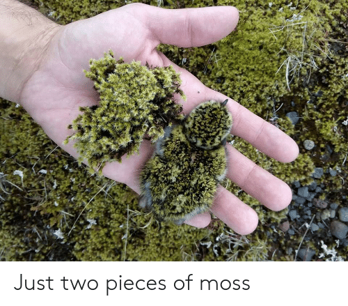 Moss, Just, and  Two: Just two pieces of moss
