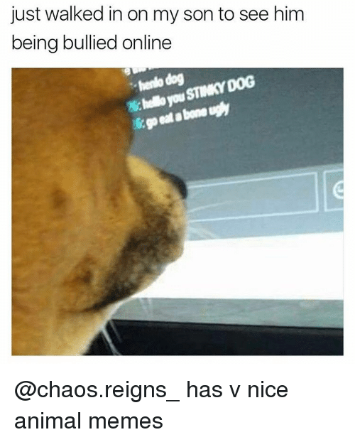 Memes, 🤖, and Reign: just walked in on my son to see him  being bullied online  hendo dog  STINKY DOG @chaos.reigns_ has v nice animal memes