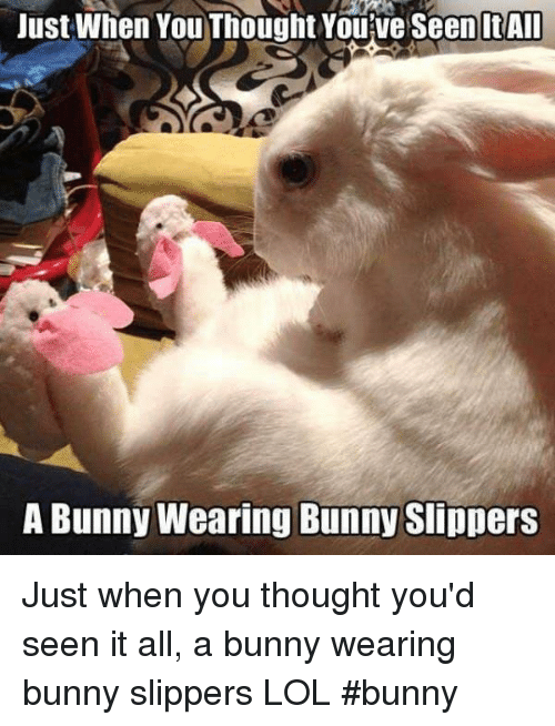 6776429acc72 Just When You Thought Youve Seen ItAll a Bunny Wearing Bunny ...