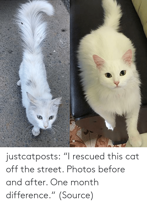 """Aww, Reddit, and Target: justcatposts:  """"I rescued this cat off the street. Photos before and after. One month difference.""""(Source)"""