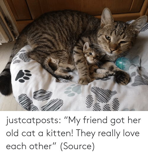 """Aww, Love, and Reddit: justcatposts:  """"My friend got her old cat a kitten! They really love each other""""(Source)"""
