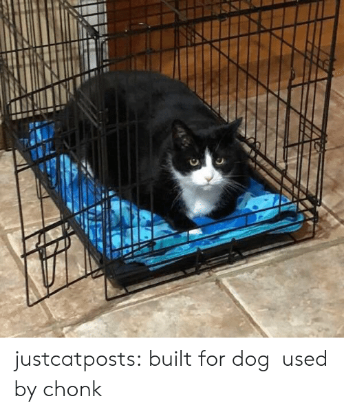 Target, Tumblr, and Blog: justcatposts: built for dog used by chonk