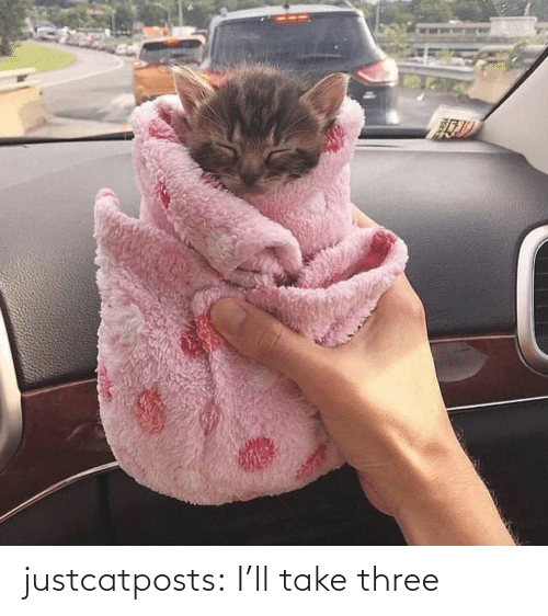 Target, Tumblr, and Blog: justcatposts:  I'll take three