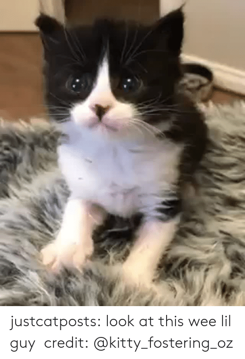 Instagram, Target, and Tumblr: justcatposts: look at this wee lil guy credit:@kitty_fostering_oz