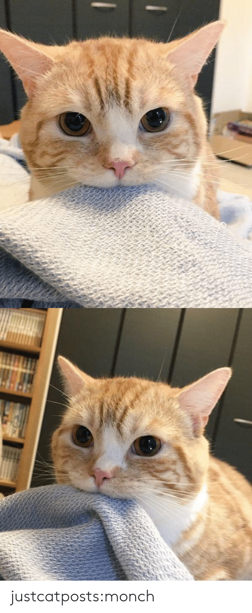Target, Tumblr, and Blog: justcatposts:monch
