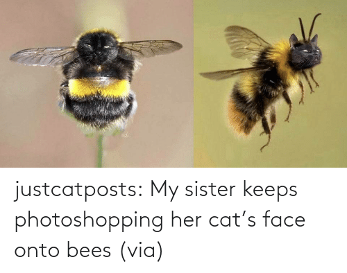 Cats, Funny, and Reddit: justcatposts:  My sister keeps photoshopping her cat's face onto bees (via)