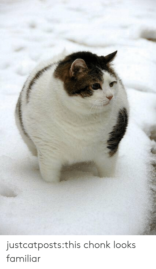 Target, Tumblr, and Blog: justcatposts:this chonk looks familiar