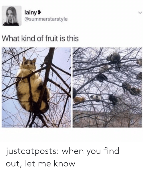 Target, Tumblr, and Blog: justcatposts:  when you find out, let me know