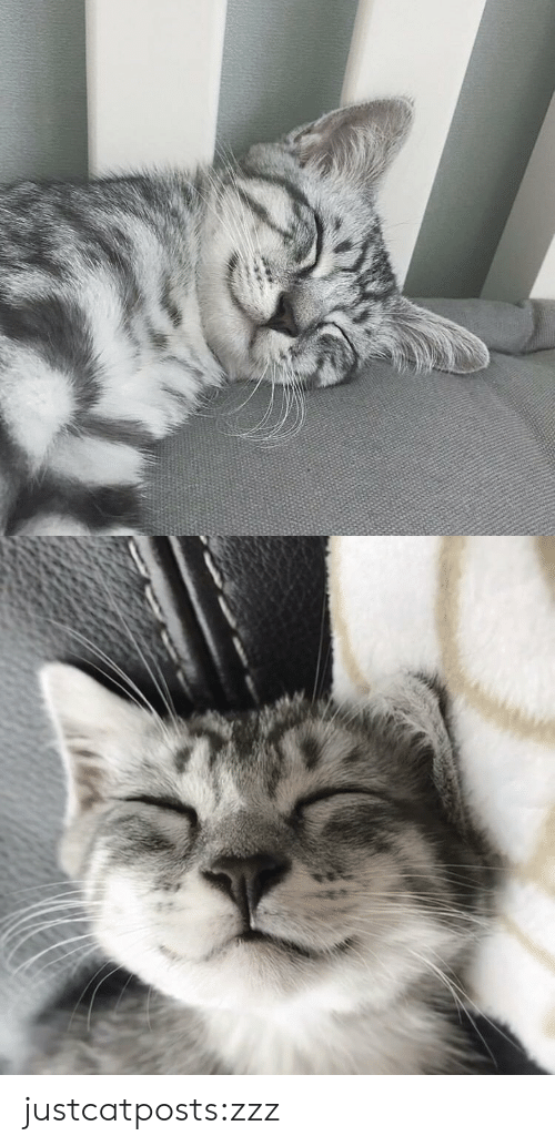 Target, Tumblr, and Blog: justcatposts:zzz
