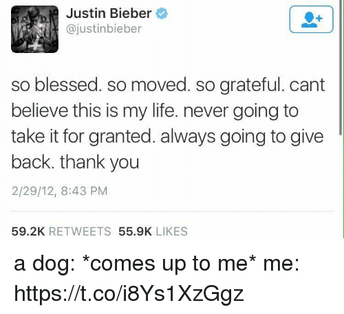 Blessed, Funny, and Justin Bieber: Justin Bieber  ajustinbieber  so blessed. so moved. so grateful. cant  believe this is my life. never going to  take it for granted. always going to give  back, thank you  2/29/12, 8:43 PM  59.2K  RETWEETS  55.9K  LIKES a dog: *comes up to me*   me: https://t.co/i8Ys1XzGgz
