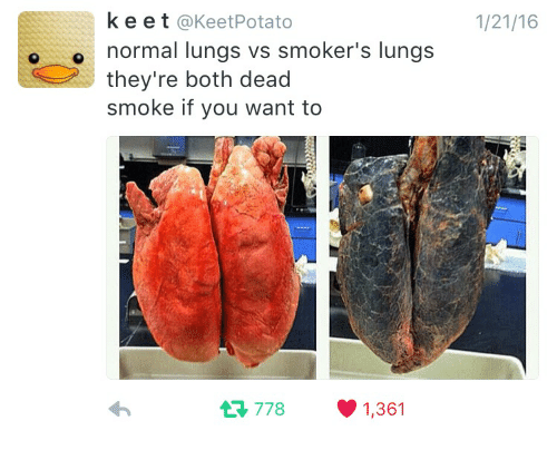 k e e t potato o normal lungs vs smoker s lungs they re both dead