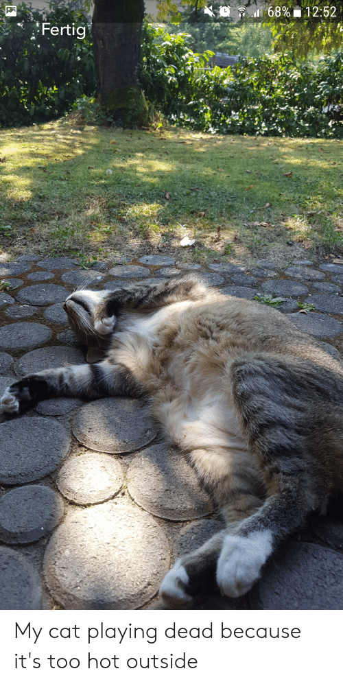 Cat, Hot, and Dead: K  ft di 6896  12:52  Fertig My cat playing dead because it's too hot outside