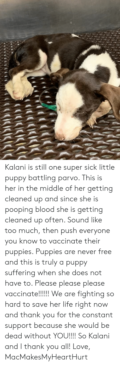 Life, Love, and Memes: K(IcIKI  KISIKICICIC Kalani is still one super sick little puppy battling parvo. This is her in the middle of her getting cleaned up and since she is pooping blood she is getting cleaned up often. Sound like too much, then push everyone you know to vaccinate their puppies. Puppies are never free and this is truly a puppy suffering when she does not have to. Please please please vaccinate!!!!!! We are fighting so hard to save her life right now and thank you for the constant support because she would be dead without YOU!!!! So Kalani and I thank you all!   Love, MacMakesMyHeartHurt