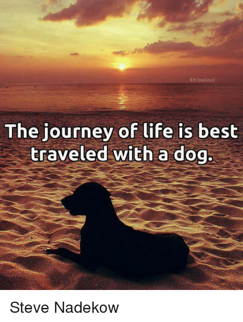 Journey, Life, and Memes: K9 Instinch  The journey of life is best  traveled with a dog. Steve Nadekow