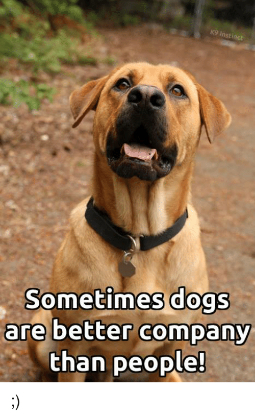 Dogs, Memes, and 🤖: K9 Instinct  Sometimes dogs  are better company  than people! ;)