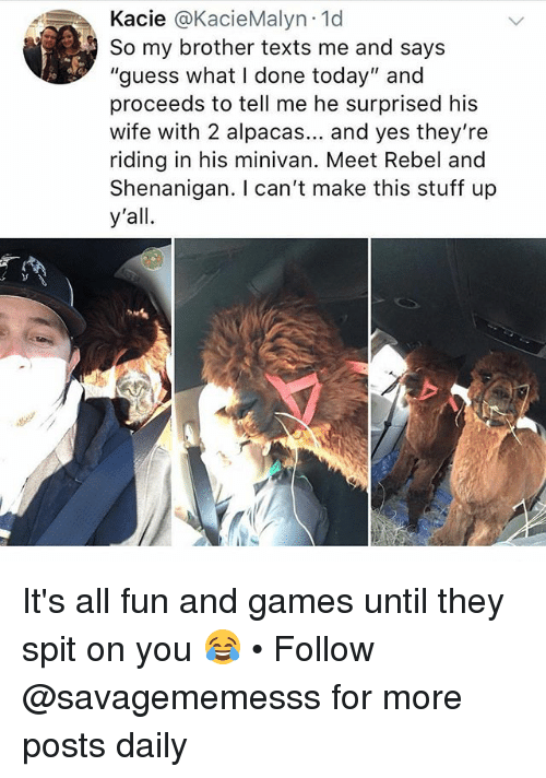 "Memes, Games, and Guess: Kacie @KacieMalyn.1d  So my brother texts me and says  ""guess what I done today"" and  proceeds to tell me he surprised his  wife with 2 alpacas... and yes they're  riding in his minivan. Meet Rebel and  Shenanigan. I can't make this stuff up  y'all. It's all fun and games until they spit on you 😂 • Follow @savagememesss for more posts daily"